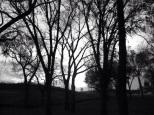 Super-eerie trees!